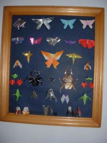 rovargyűjtemény