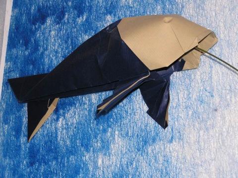 Koi-No-Bori - Ponty alakú szélzsák