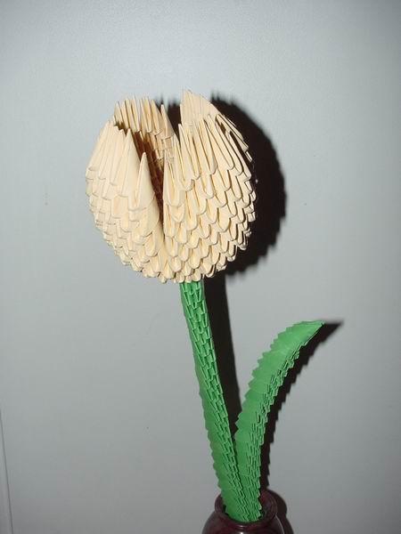 ori_bhh_tulipanom