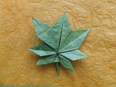 levél / leaf