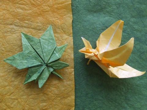 levél és orchidea
